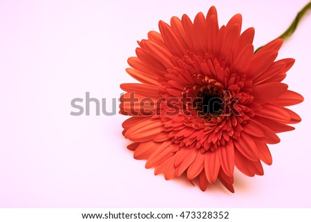 Beautiful fall colors flower isolate