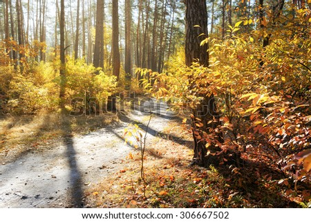 Beautiful fall forest illuminated by evening sun with footpath - stock photo