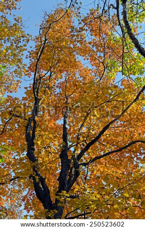 Beautiful fall forest scene with vibrant colors. Mono cliffs Provincial Park. - stock photo