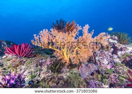 Beautiful fan coral in tropical coral reef. - stock photo