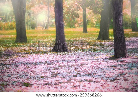 beautiful fantastic of flowers falling in colorful park use for imagine autumn season outdoor background - stock photo