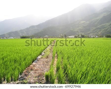 beautiful farm - stock photo