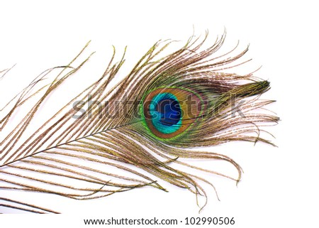 Beautiful feather of peacock