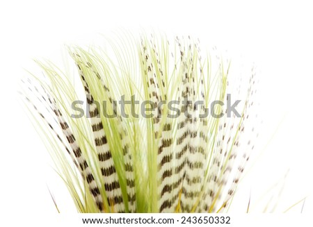 beautiful feather on white background. close-up - stock photo