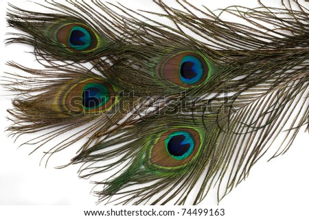 beautiful feathers of peacock - stock photo