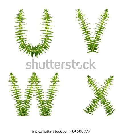beautiful fern tree alphabet set u-x, green concept - stock photo