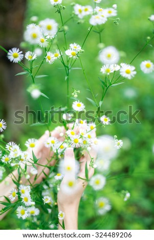 beautiful field of daisies and hands girls - stock photo
