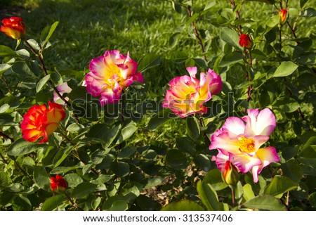 Beautiful field of flowers at spring in Spain - stock photo