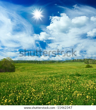 Beautiful field with dandelions and the cloudy sky - stock photo
