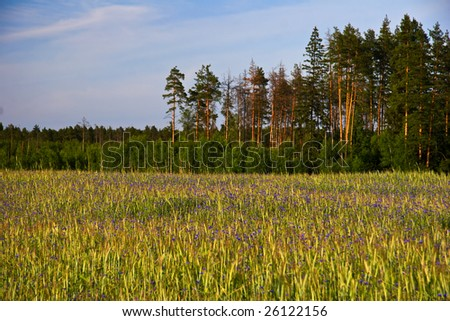 Beautiful field with flowers on forest background.