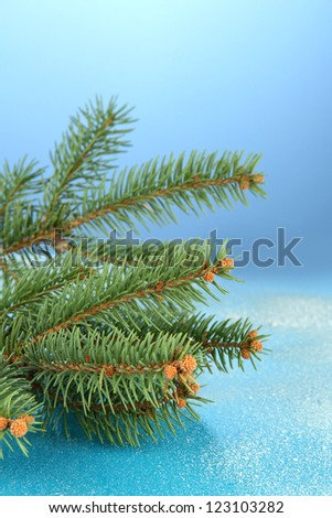 beautiful fir tree, on blue background - stock photo