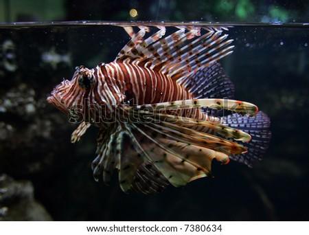 Beautiful fish. - stock photo