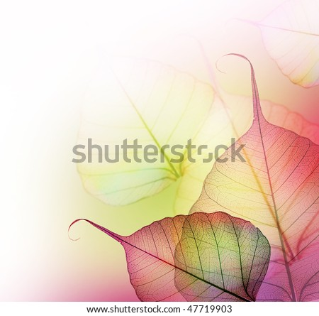 Beautiful Floral Border-Leaves
