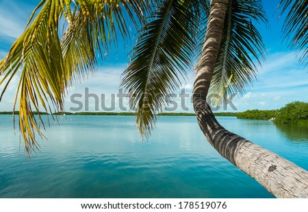 Beautiful Florida Keys along the shoreline coconut palm tree and gulf view. - stock photo