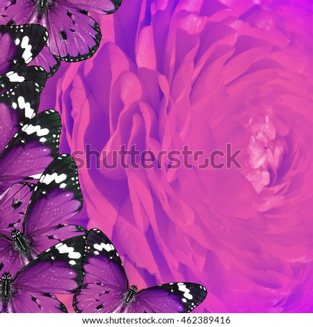 Beautiful flower and butterflies. Nature and wildlife lilac abstract composition