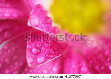 Beautiful flower closeup