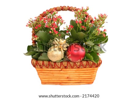 Beautiful flower detail with christmas decoration - stock photo