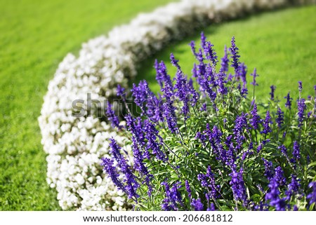 Beautiful flower garden background in Salzburg city. Mirabell Gardens. Austria - stock photo