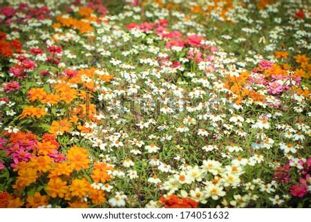 Beautiful flower in beautiful garden - stock photo