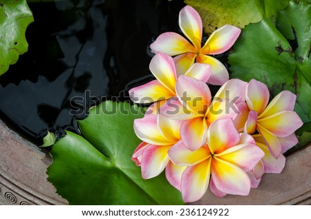 Beautiful flower in old pottery for background