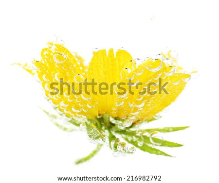 Beautiful flower in sparkling water, isolated on white