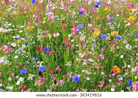 beautiful flower meadow with various colorful flowers, fodder plants for bees. - stock photo
