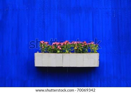 Beautiful flower on blue wall background - stock photo