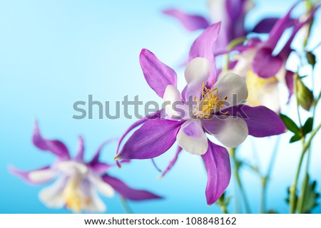beautiful flower on sky background - stock photo