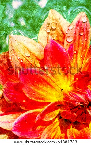 Beautiful flower with reflection on water - stock photo
