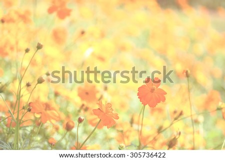 beautiful flower with vintage color style - stock photo