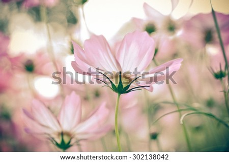 beautiful flower with vintage style - stock photo