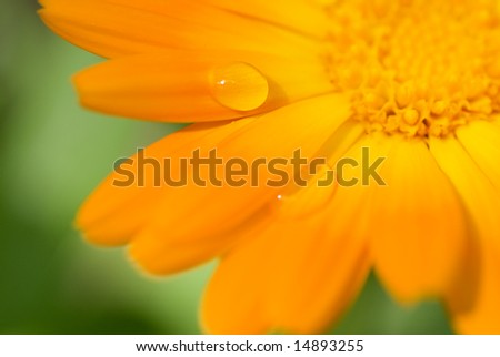 Beautiful flower with water drops on it's petals (Shallow DoF, focus on a drop) - stock photo