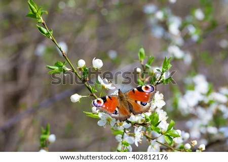 beautiful flowering apple trees. background with blooming flowers in spring day.Blossoming of cherry flowers in spring time with green leaves, natural floral seasonal background with copy space
