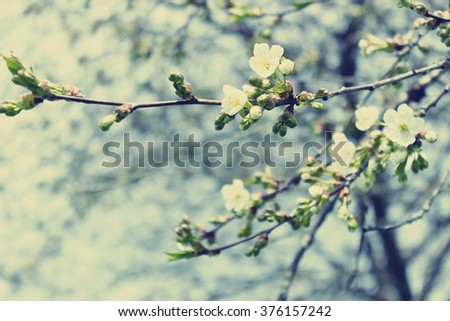 beautiful flowering apple trees.  background with blooming flowers in spring day. selective focus and bokeh.  toning vintage style - stock photo