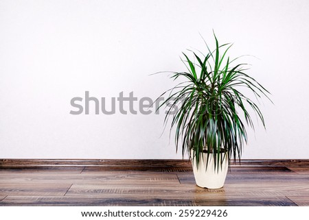 beautiful flowerpot  on wall background - stock photo