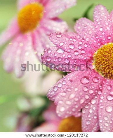 Beautiful flowers after the rain - stock photo