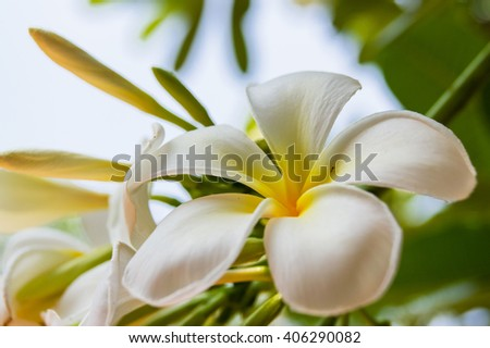 Beautiful flowers around the house 11 - stock photo