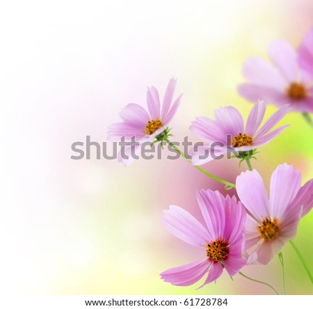 Beautiful Flowers Border.Floral design over white - stock photo
