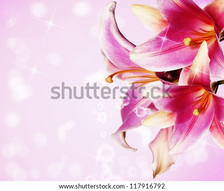 Beautiful flowers card.Pink lily - stock photo