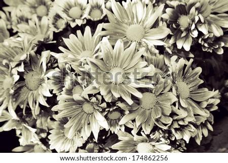 Beautiful flowers Duotone Black&white, high key. - stock photo