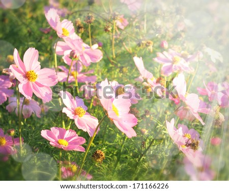 Beautiful flowers field on sunny day - stock photo