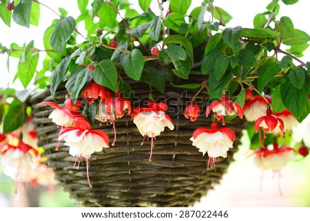 Beautiful flowers in a basket in the garden - stock photo