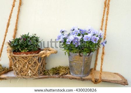 beautiful flowers in a flower pot - stock photo