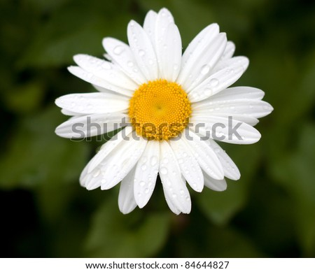 Beautiful flowers in a meadow against green bushes - stock photo