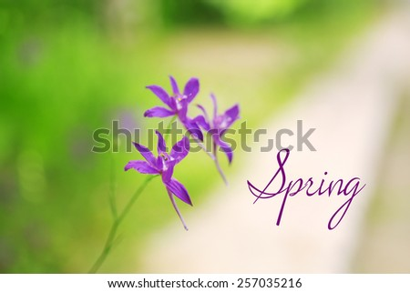 Beautiful flowers in field. Hello Spring concept - stock photo