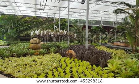 Beautiful Flowers in greenhouse  - stock photo