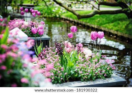 Beautiful flowers in Keukenhof Gardens, Netherlands  - stock photo