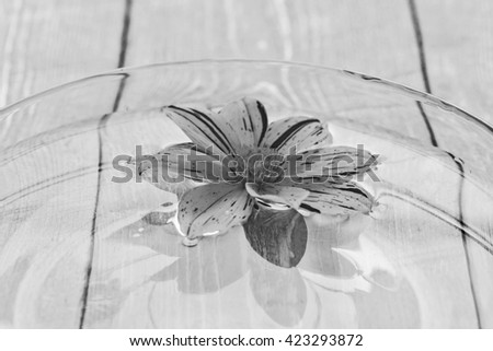 beautiful flowers in the water. Black - white photos, old style.
