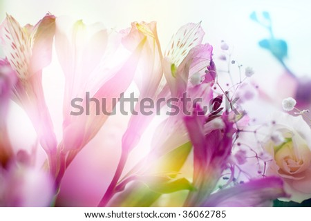 beautiful flowers made with color filters - stock photo