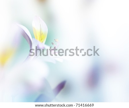 beautiful flowers made with color filters. can be used as background - stock photo